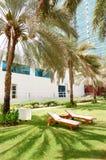 Sunbeds på den gröna lawn- och palmträdskuggan arkivbild