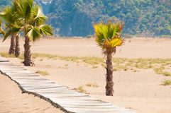 Sunbeds and rattan parasols on sandy seaside Stock Photography