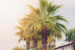 Sunbeds, umbrellas and palms on the Alikanas beach, Zakynthos Island Stock Photo