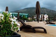 Sunbeds vid pölen på den tropiska semesterorten Sommarferier, hav och tropiska familjferier Royaltyfri Fotografi