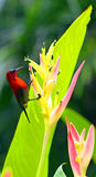 Sunbird Stock Photography