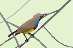 Sunbird Royalty Free Stock Photo