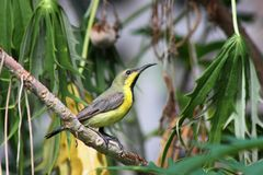 Sunbird Stock Photo