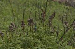 Sunbird Doble-agarrado en reserva de naturaleza de Kwazulu Natal del castillo de Giants Foto de archivo libre de regalías