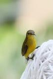 Sunbird gonfiato giallo su un panno immagini stock