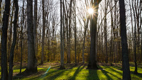 Sunburst весны Стоковое Фото