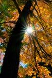 Sunburst через листву осени Стоковые Фото