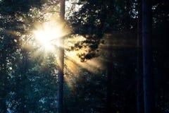 sunburst foto de archivo libre de regalías