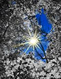 sunburst imagen de archivo libre de regalías