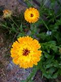 sunburst Fotografía de archivo libre de regalías