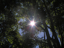 Sunburst através das árvores imagens de stock