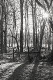 Sunburst através das árvores Fotos de Stock