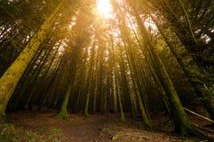 Sunburst através das árvores foto de stock