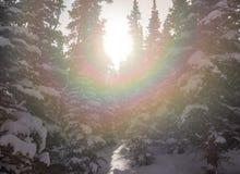 Sunburst através das árvores cobertos de neve Imagens de Stock