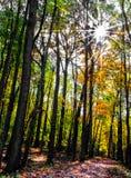 Sunburst through autumn leaves Stock Images