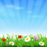 Sunburst Background With Flower And Grass Royalty Free Stock Image