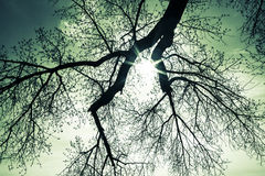 Sunburst through tree branches Stock Photo