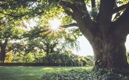 Sunburst beams through huge old tree in late spring at Ringwood State Park, NJ in vintage setting Stock Photo
