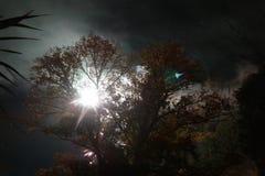 Sunburst da meia-noite imagem de stock royalty free