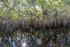 Sunburst dos manguezais Imagem de Stock