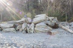 Sunburst on Driftwood Royalty Free Stock Photography