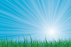 Sunburst green grass Royalty Free Stock Photography