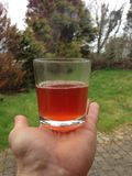 Sunburst juice Royalty Free Stock Photo