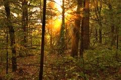 Sunburst at Levis Mound Royalty Free Stock Images
