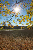Sunburst through maple branches and farmland Stock Photo