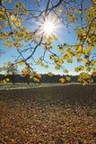 Sunburst through maple branches and farmland stock photo