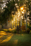 Sunburst på den Litchfield nationalparken fotografering för bildbyråer