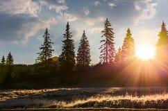 Sunburst przez świerkowego lasu obraz royalty free