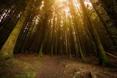 Sunburst przez drzew Obrazy Royalty Free
