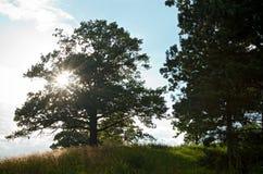 Sunburst przez drzewa na prerii Fotografia Stock