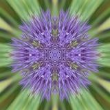 Sunburst purpurfärgad blomma vektor illustrationer
