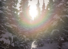Sunburst through snow covered trees. A rainbow refracts off of sunlight coming through snow covered trees near Brainard Lake Stock Images