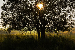 Sunburst sun rays through the branches of tree silhouette Stock Image