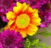 Sunburst Sunflower Royalty Free Stock Images