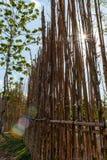 Sunburst till och med ett staket på en blå himmel royaltyfri foto