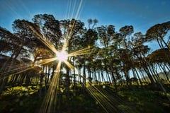 Sunburst till och med träden Royaltyfri Fotografi