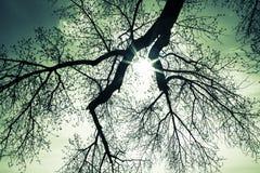 Sunburst till och med trädfilialer arkivfoto
