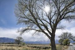 Sunburst through tree branches Royalty Free Stock Photos