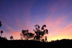 Sunburst. Tree sillouette with sunrise backdrop Stock Photos