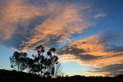 Sunburst. Tree sillouette with sunrise backdrop Royalty Free Stock Image