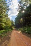 Sunburst w plantaci Zdjęcie Royalty Free