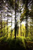 Sunburst through a wooded area Stock Images