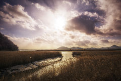 Suncheon bay Stock Images