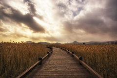 Suncheon wetlands Royalty Free Stock Image