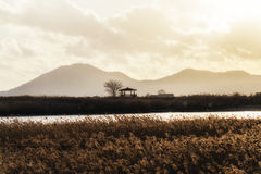 Suncheon wetlands Royalty Free Stock Images