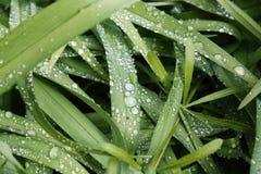 sund fjäder för ny gräsgreen Arkivfoto